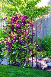 100pcs_bag Clematis seeds flower clematis vines bonsai flower seeds perennial flowers climbing clema