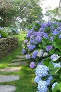 17 Dreamy Hydrangea Gardens That Are Giving Us Major Inspiration (1)