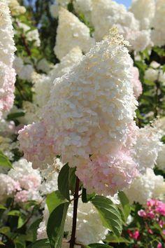 3 in spring and add rose fertilizer.