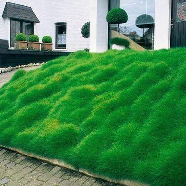 Bearskin grass_ garden_ entrance_ modern_ house_ house entrance_ grass _bearskin _entrance _garden