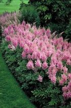 Best pictures_ images and photos about front yard landscaping ideas with perennials _homedecor _gar (21)