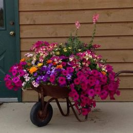 Best pictures_ images and photos about front yard landscaping ideas with porch _homedecor _gardende (1)
