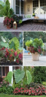 Best pictures_ images and photos about full sun front yard landscaping ideas _homedecor _gardendec (8)