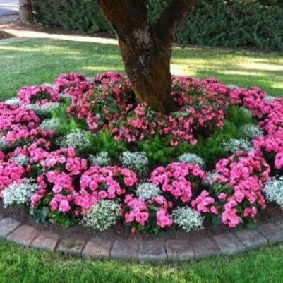 Circular Shade_Loving Annuals Flower Bed _frontyardlandscaping _landscapingideas _flowerbed _flowerg
