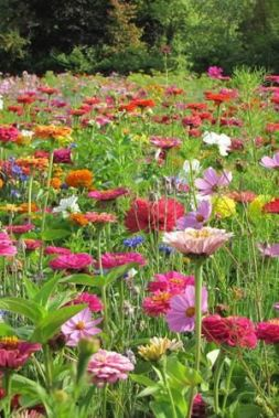 Cottage Garden Mix _ perennial and biennial flowers _ flower seeds _ sarah raven seeds
