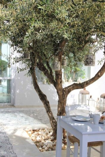 Courtyard olive tree. I_ve always wanted an olive tree _ with lights_ of course.