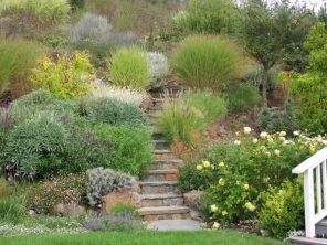 Decorative grasses in the garden _ interesting facts and practical tips _decorative _facts _garden