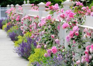 Heavenly Picket Fence _frontyard _landscapingideas _floweragarden _gardenfence _apartmentdecorating