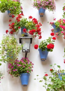 How to use pots to cover walls with flowers _ take inspiration from Spanish courtyard gardens