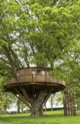 Meggie O_Rourke_s tree house is a bit like this_ surrounded by three maple trees_ with squirrels lea. From the no