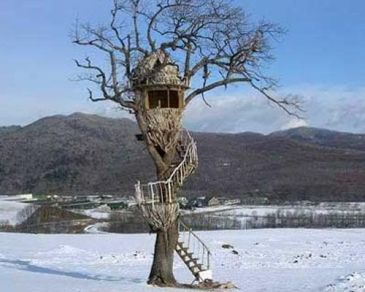 Nescafé Treehouse Takashi Kobayashi_ one of the world's leading treehouse build. Kobayashi bu