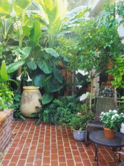 Take Advantage of Texture Big_ bold tropical plants create a lush feel. Their large leaves can change the scale of a small space to help it feel larger. (Plus_ many tropical plants are super cool_)