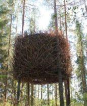 The Bird_s Nest by esperanza