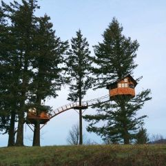 The Cinder Cone Foster Huntington's house in the trees