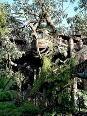 The Swiss Family Robinson_s Tree House_ before it was transformed to Tarzan_s Tree House_