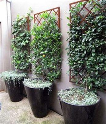 tiny courtyard hide fence narrow trellis _ Ecosia