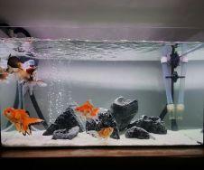 Fish_Tank (1)