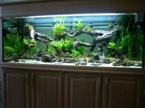 Fish_Tank (13)