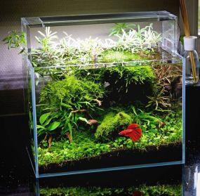 Fish_Tank (15)