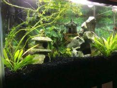 Fish_Tank (18)