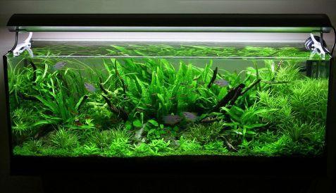 Fish_Tank (22)