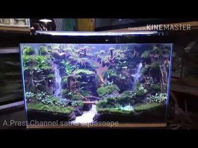 Fish_Tank (23)