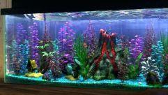 Fish_Tank (30)