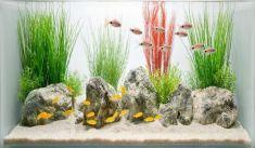 Fish_Tank (35)