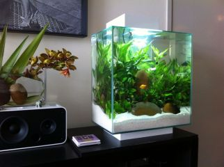 Fish_Tank (37)