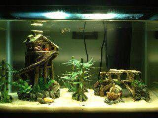 Fish_Tank (41)