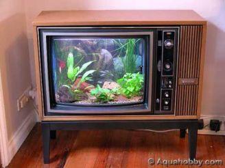 Fish_Tank (42)