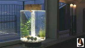 Fish_Tank (45)