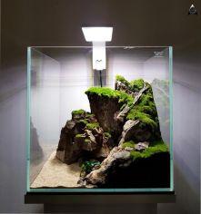 Fish_Tank (49)