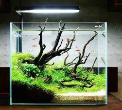 Fish_Tank (5)