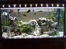 Fish_Tank (52)