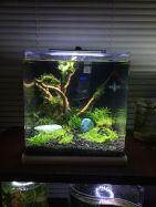 Fish_Tank (54)