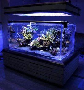 Fish_Tank (57)