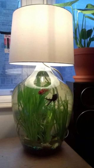 Fish_Tank (60)