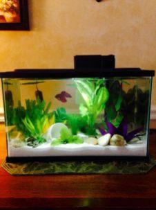 Fish_Tank (62)