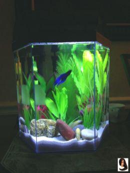 Fish_Tank (74)