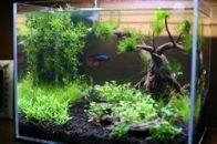 Fish_Tank (76)