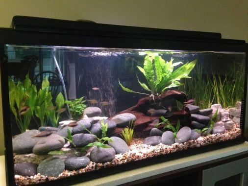 Fish_Tank (79)