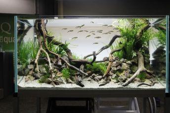 Fish_Tank (81)