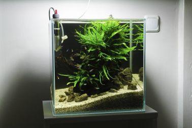 Fish_Tank (82)