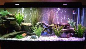 Fish_Tank (84)