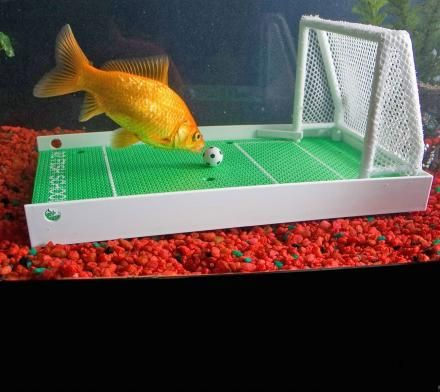 Fish_Tank (92)