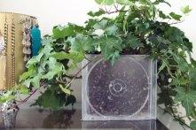 CD-case-planter-DIY