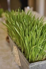 a-tin-planter-with-wheatgrass-and-twine-and-tags-is-a-lovely-and-cool-spring-centerpiece-with-a-rustic-feel