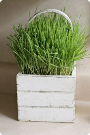 a-white-box-planter-with-a-handle-and-wheatgrass-is-a-lovely-and-cute-rustic-decoration-to-rock