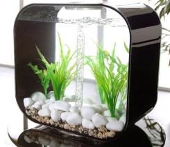 aquariums-in-interiors-11